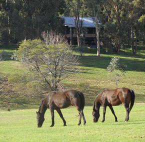 horses in front of cottage